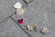 six little leafs