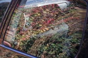 colourful reflection in car