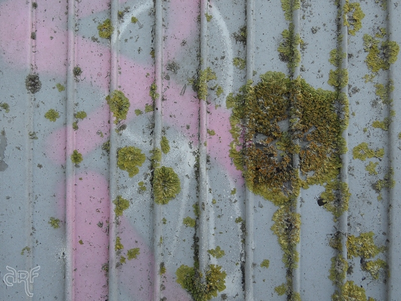 lichen and pink graffiti