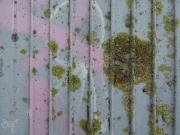 lichen and pink graffiti
