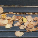 Autumn: leaves on bench