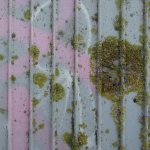 lichens and pink graffiti