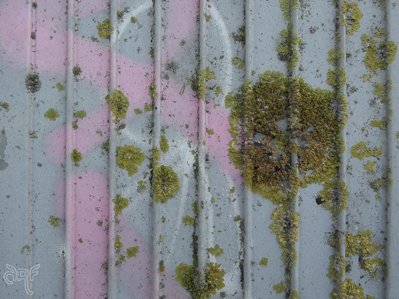 lichen-and-pink-graffiti.jpg